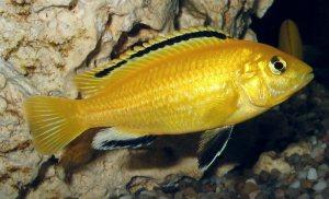 Um peixe por dia.